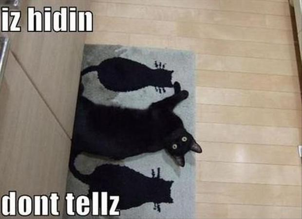 cat hiding, funny pictures