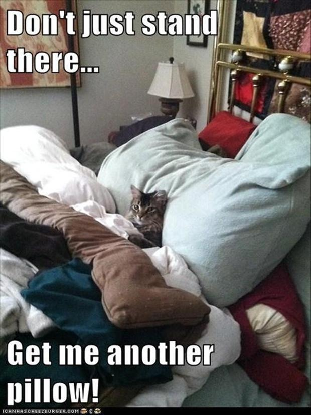 cat in bed funny pictures