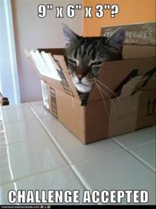 challenge accepted, box with cat in it