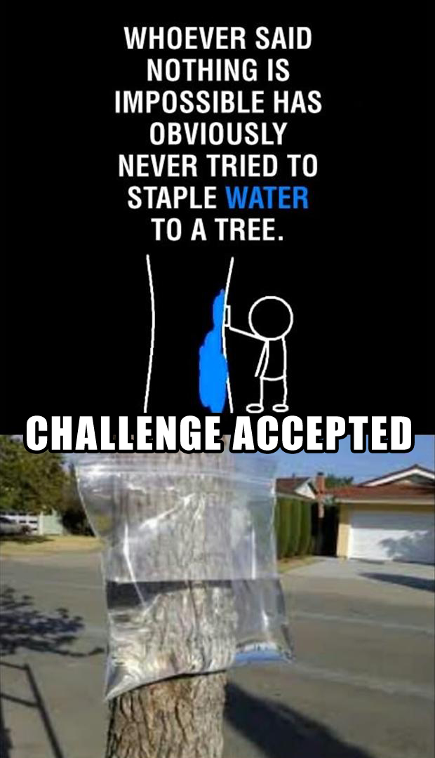 challenge accepted, staple water to a tree