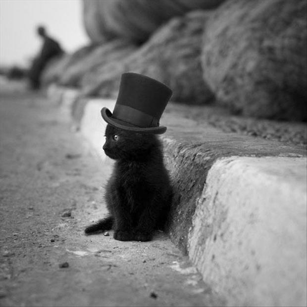 cute kitten with a top hat