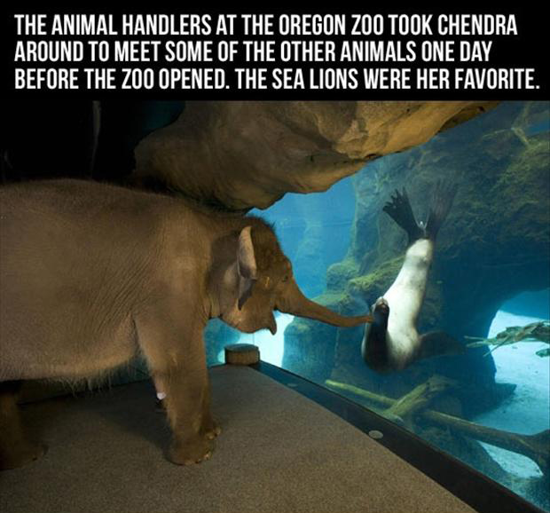 cute zoo animals, funny pictures