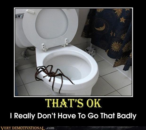 demotivational posters, spiders