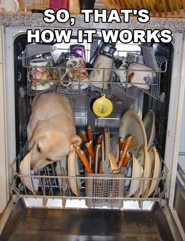 dog dishwasher, funny pictures