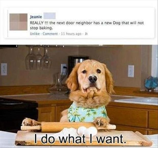 dog in the kitchen, funny pictures