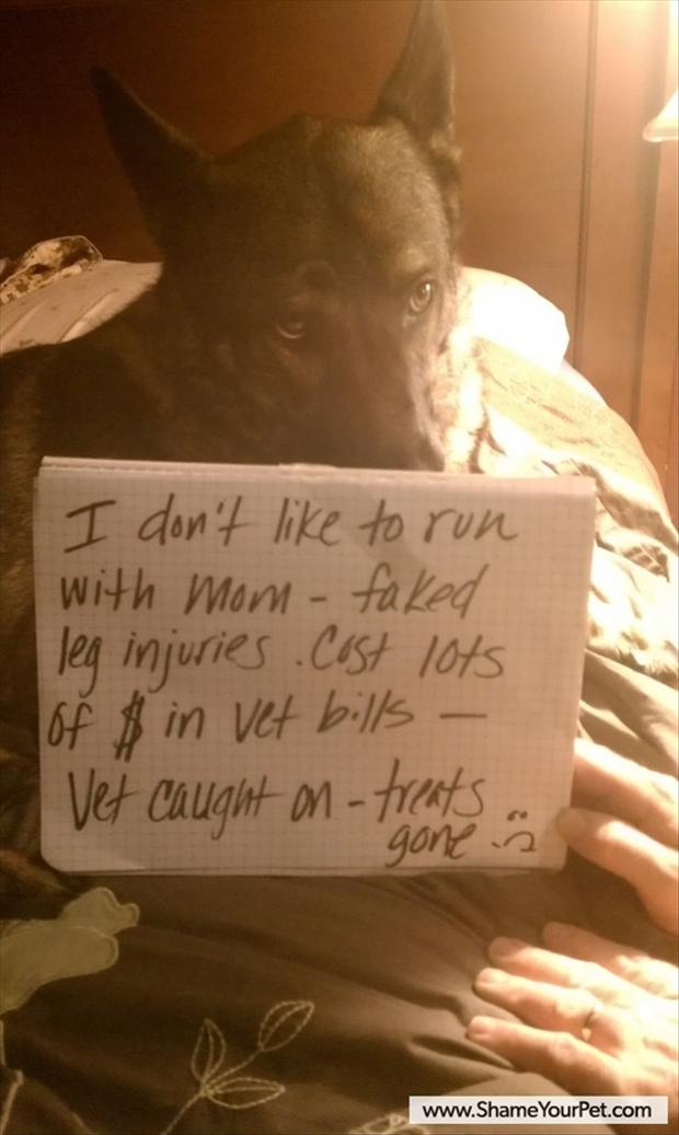 dog shaming, funny pictures