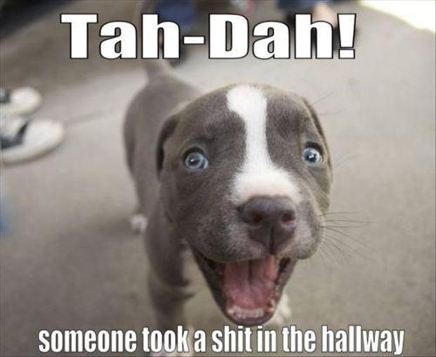 dog took a dump in the hallway funny pictures