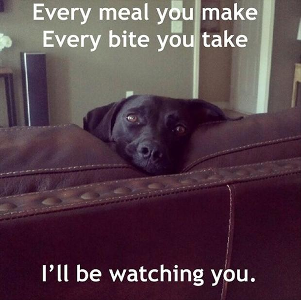 dog watching you eat, funny pictures