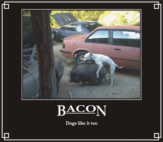 dogs like bacon, funny bacon