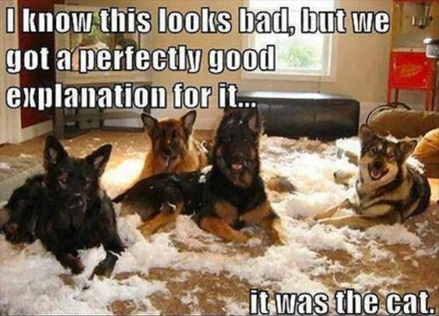 Dogs Make A Mess, Funny Quotes