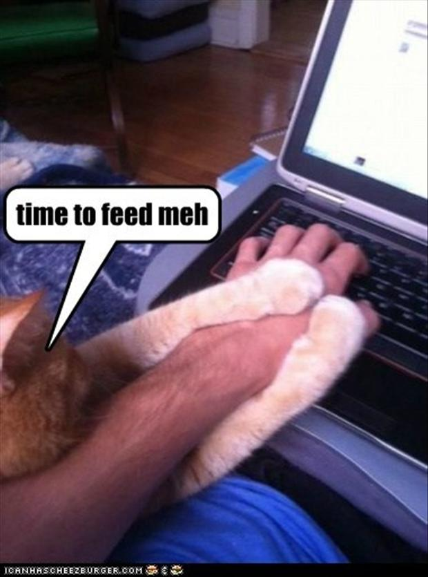feed the cat funny pictures