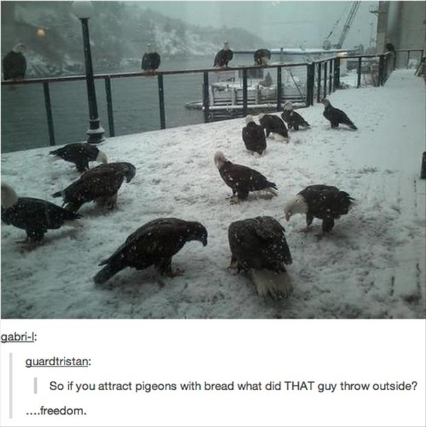 freedom bald eagles, funny pictures