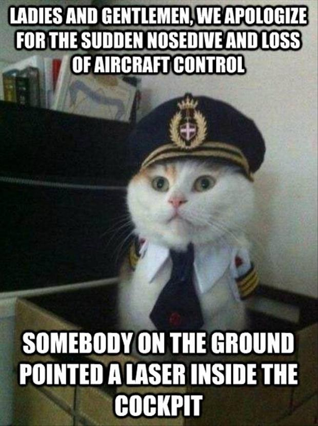funny airline catpain cat, red dot