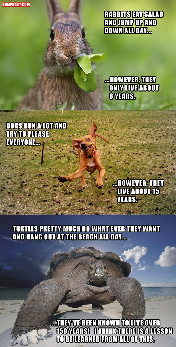 Funny animal jokes - photo#1