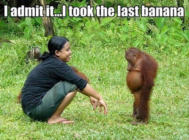 funny animal pictures, ape took the last banana