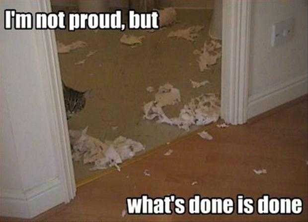 funny animal pictures, cat makes a mess