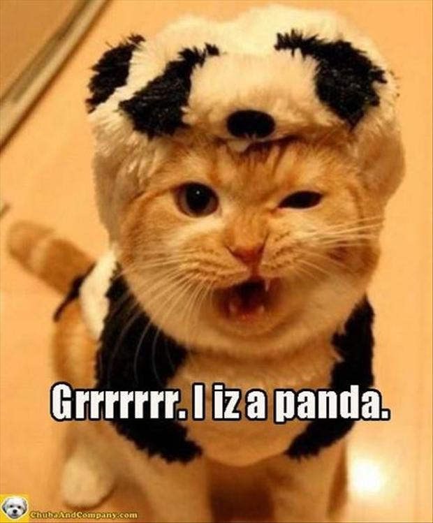 funny animal pictures, panda bear