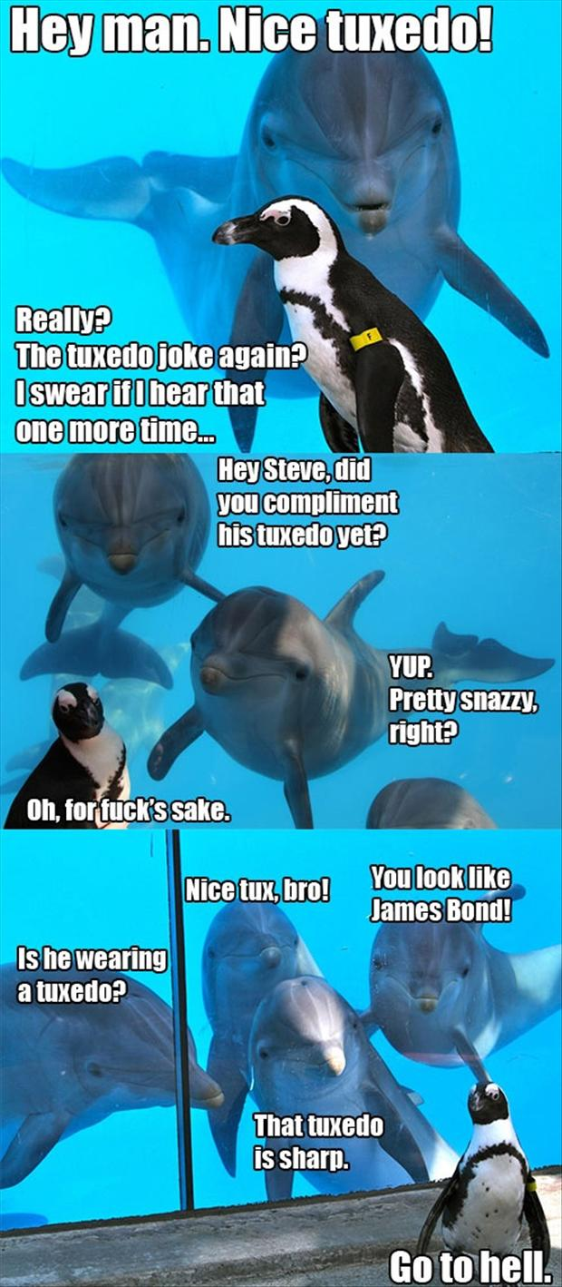 funny animal pictures, penguin