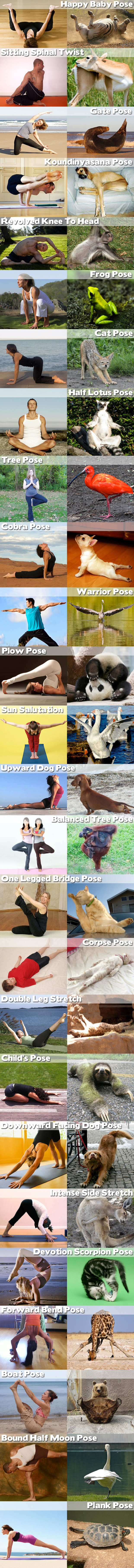 funny animal yoga