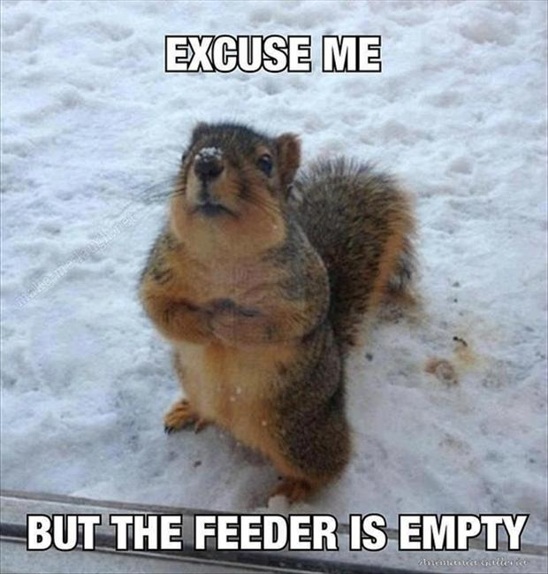 funny animals, squirrels