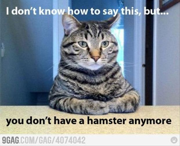funny awkward moments, hamster is eaten by a cat