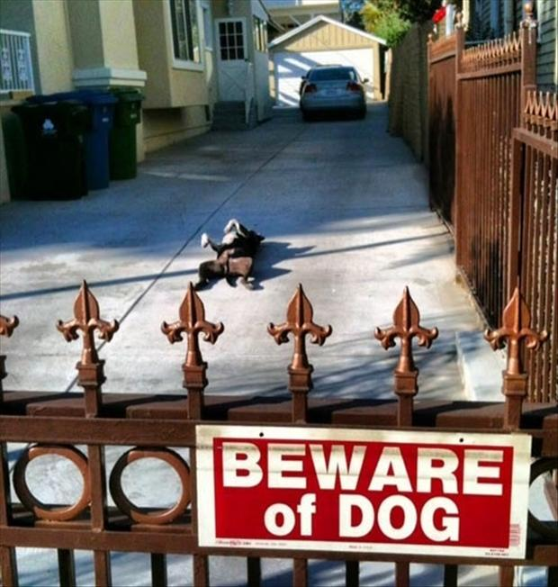 funny beware of dogs signs