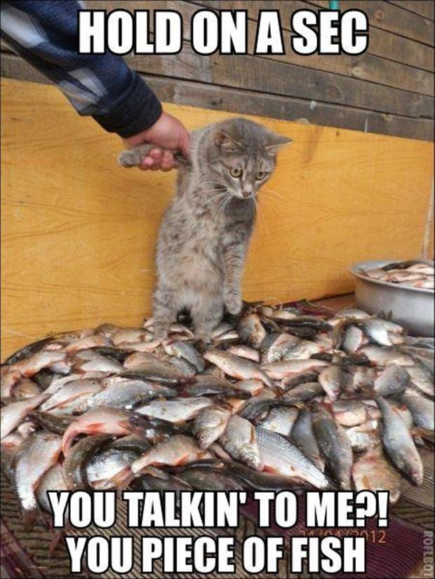funny cat and fish pictures