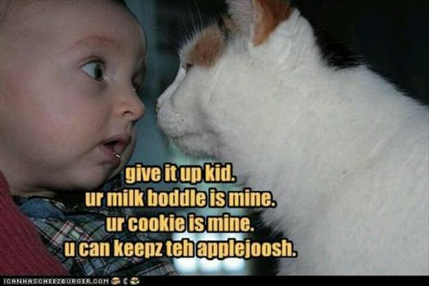 funny cat and kid