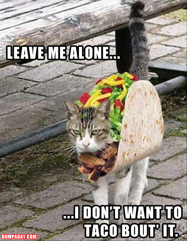 funny cat doesn't want to taco about it