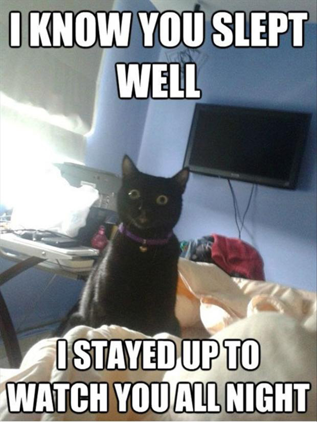 funny cat watches you sleep
