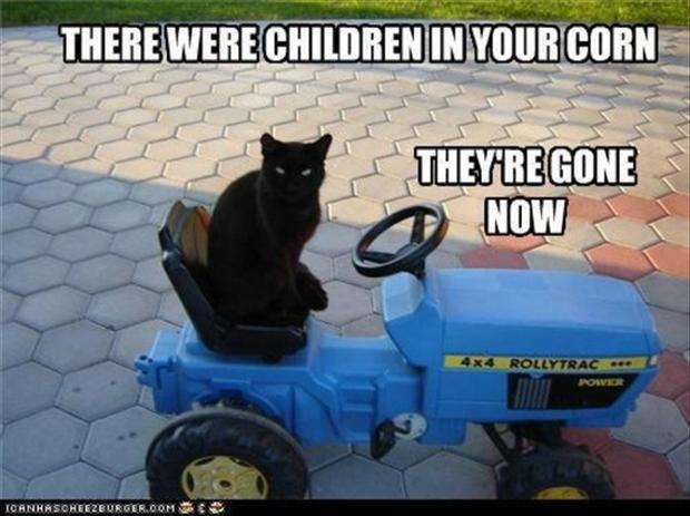 funny cats, children of the corn