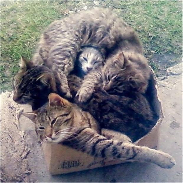 funny cats in a box