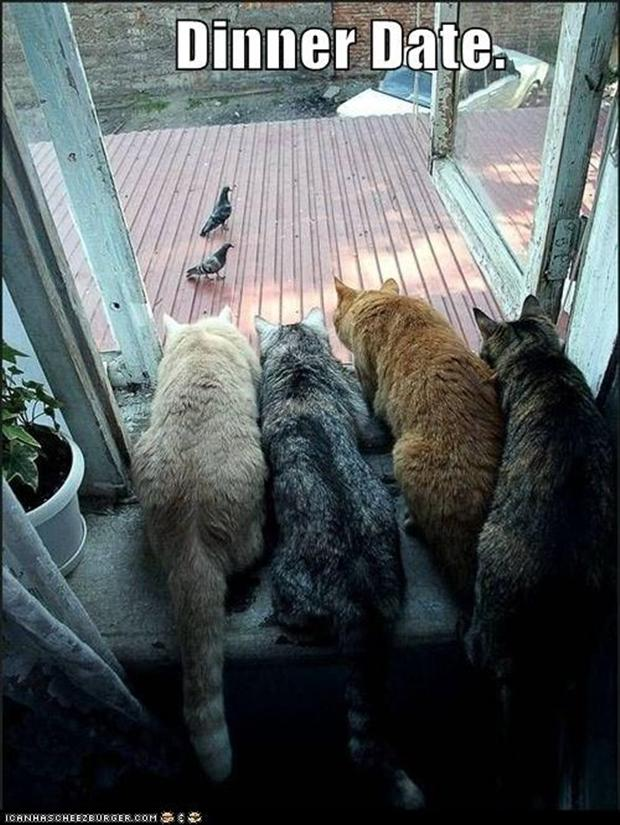 funny cats looking at birds