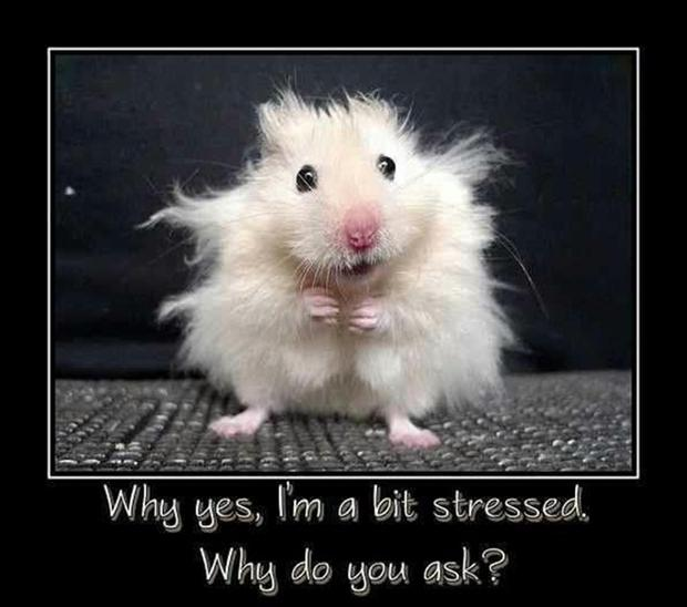 funny pictures of stressed women MEMEs