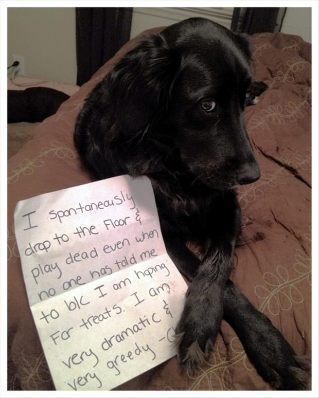 funny dog shaming notes
