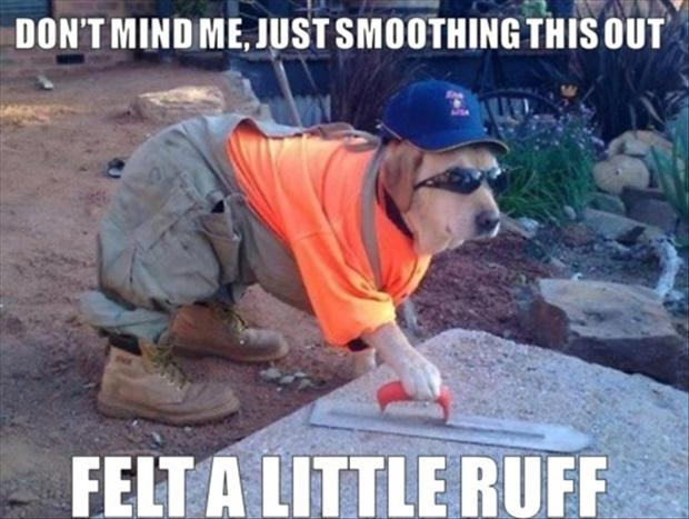 funny dog working