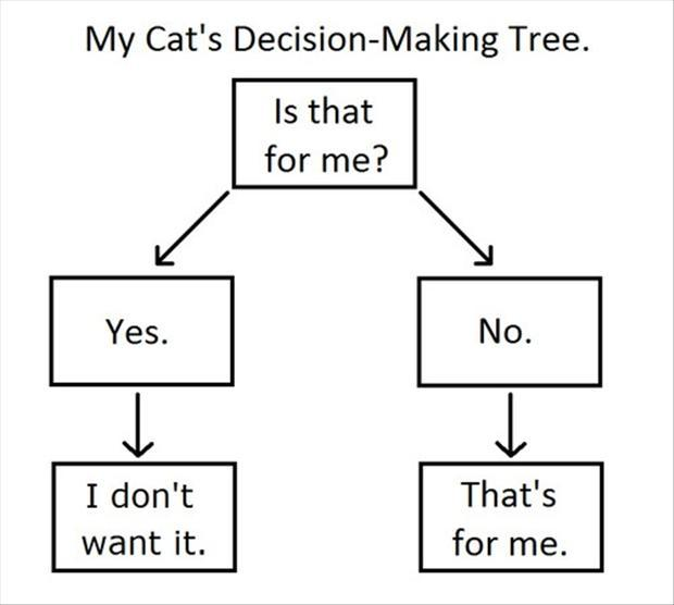 funny flow charts, cats