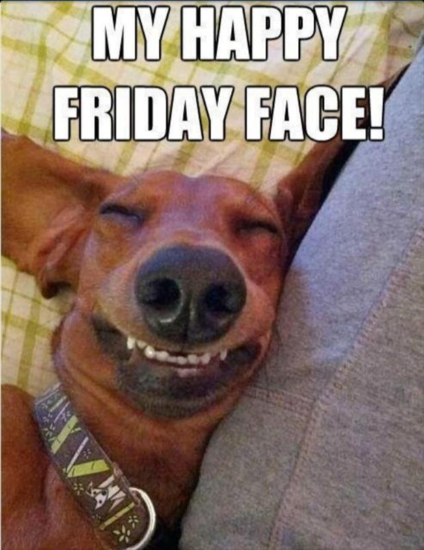 Funny dog face meme - photo#51