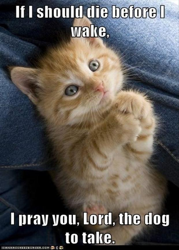 funny kitten prayer