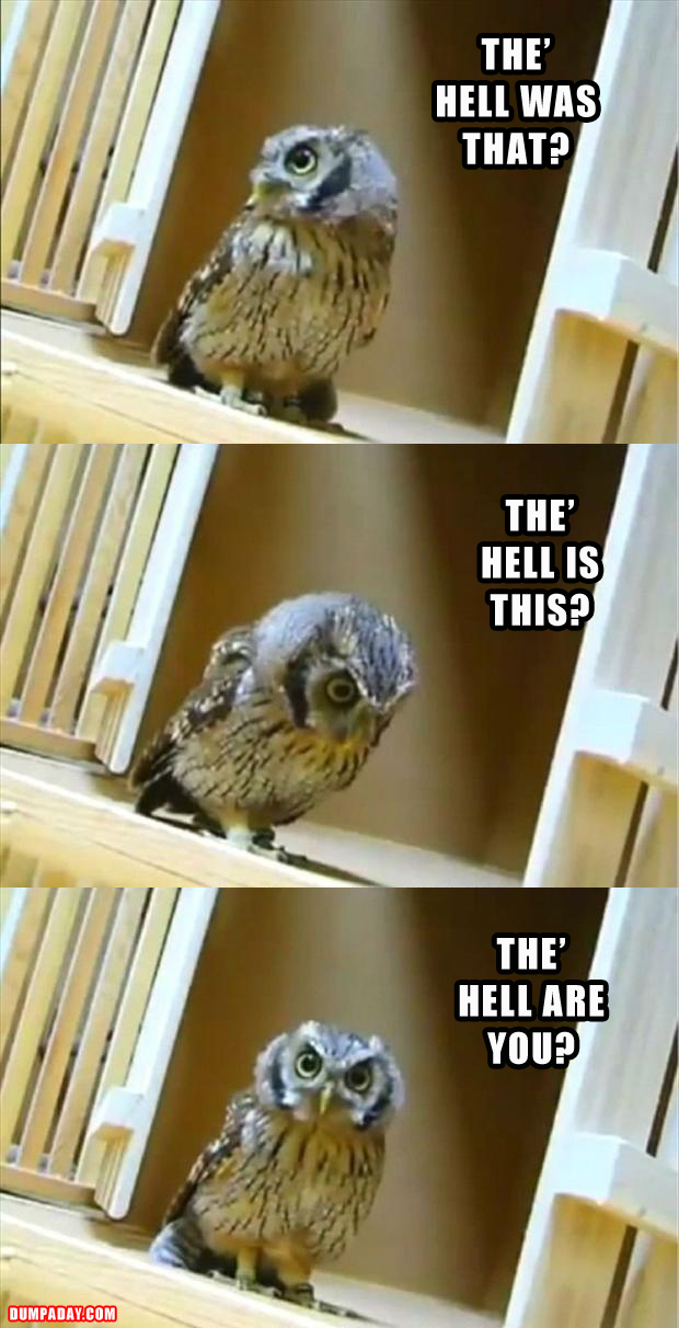 funny owl pictures 2