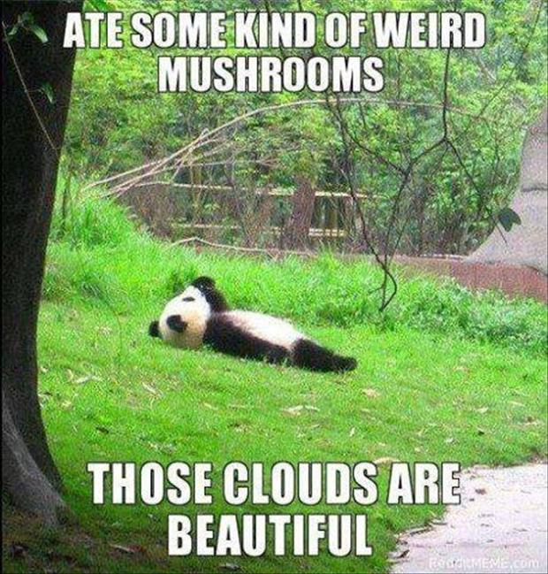 Funny panda bear dump a day funny panda bear voltagebd Image collections