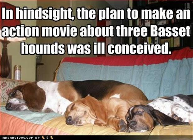 funny pictures, basset hounds