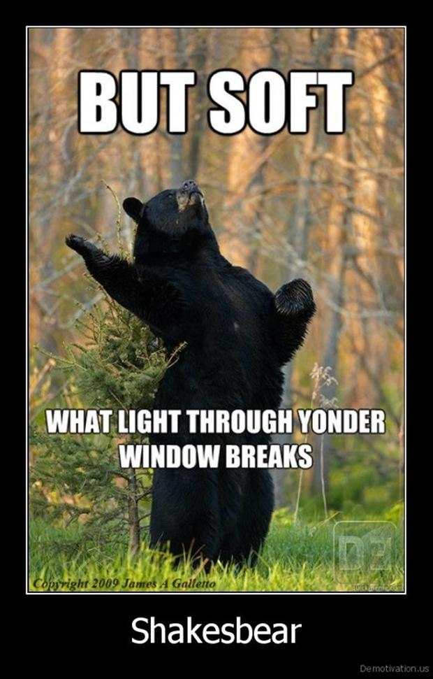 funny pictures, bears