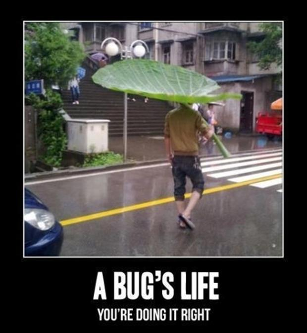 funny pictures, bugs life