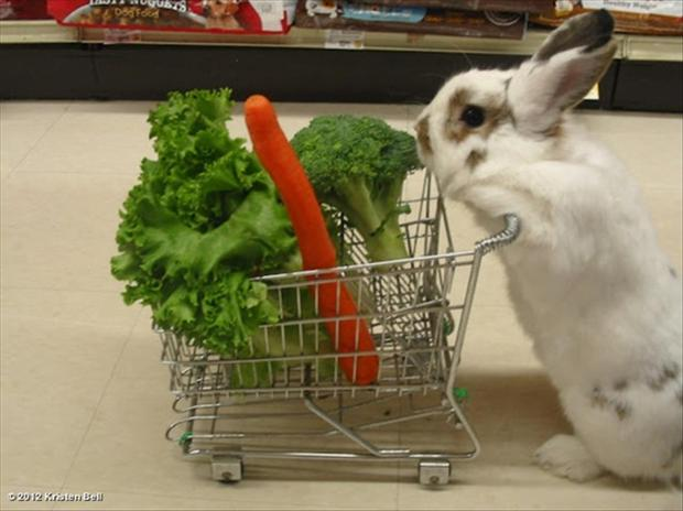 funny pictures, bunny rabbit