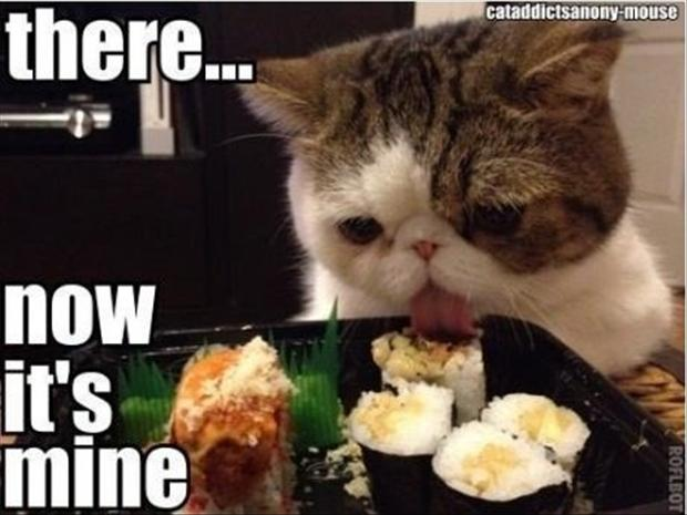 funny pictures, cat eating food