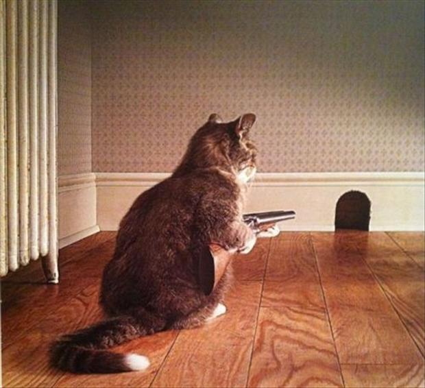 funny pictures, cat hunting mice
