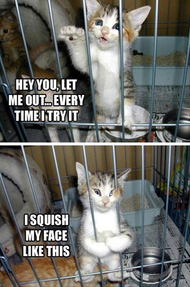 funny pictures, cat in a cage