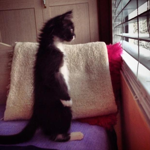funny pictures, cat looking out the window