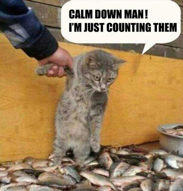 funny pictures, cat loves fish